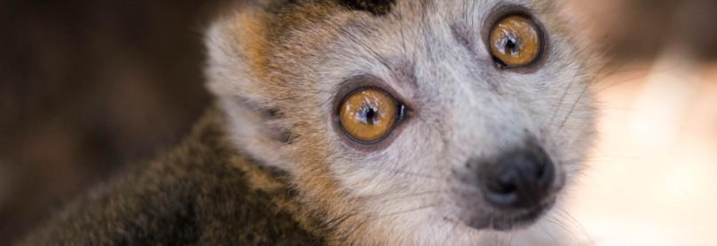 Madagaskar_Natur-Lemuren_03