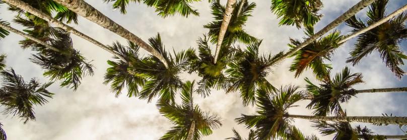Palmen-auf-Palau-1600x1200