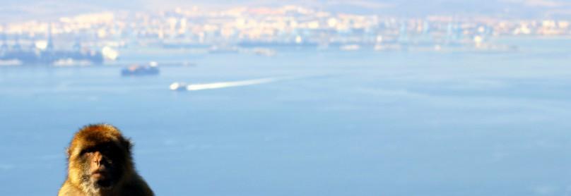 Gibraltar_Affe-1600x1075