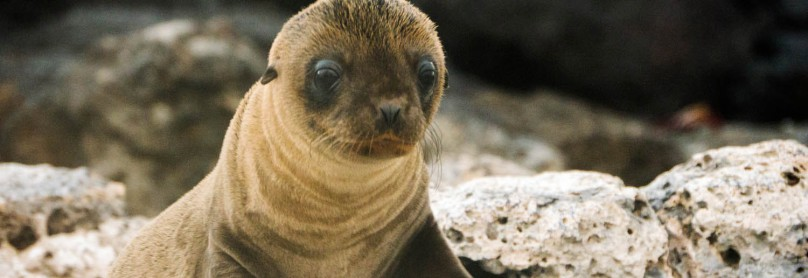 Galapagos_Animals_022