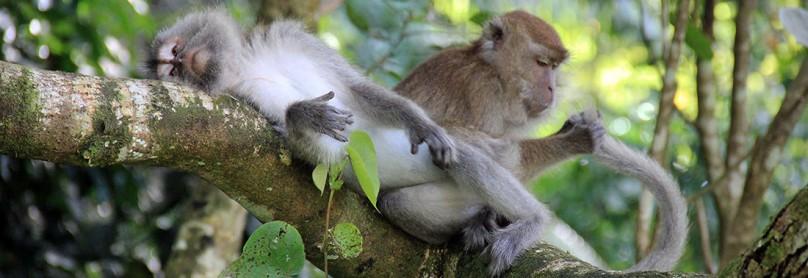 Titelbild-Borneo
