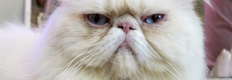 Abgezockt_Grumpy-Cat-1600x1200