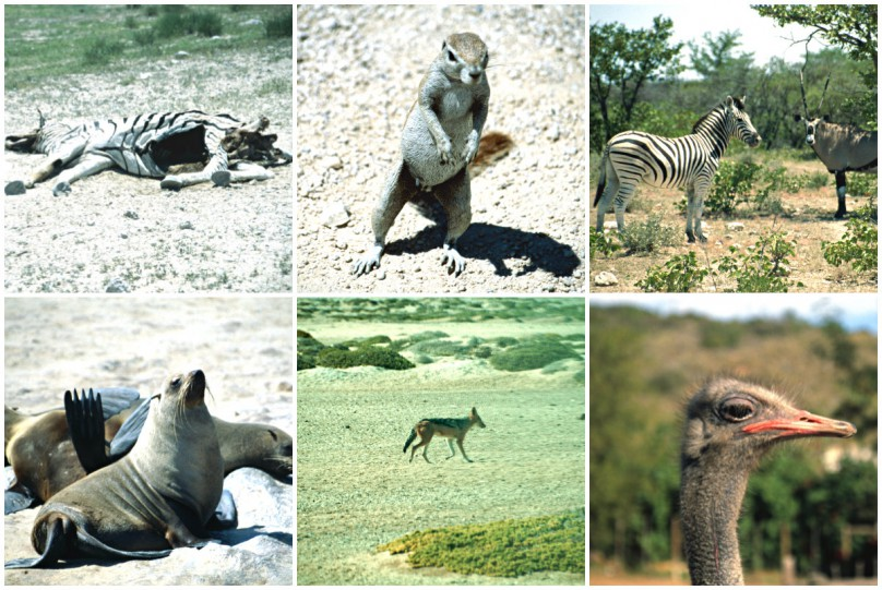 collage-Tiere-Afrika-Safari