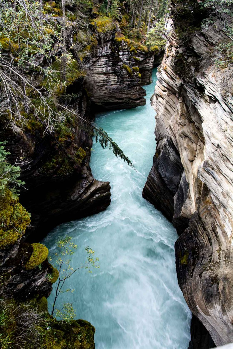 This canyon has turquoise water from the claciers in the Rocky Mountains. It looks wild, rough and cold.