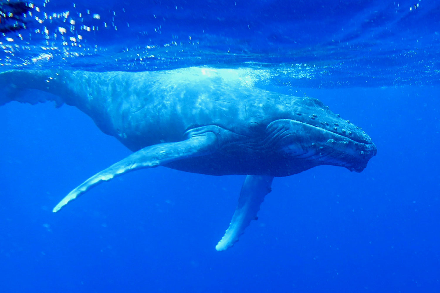 fabfamily_humpback02