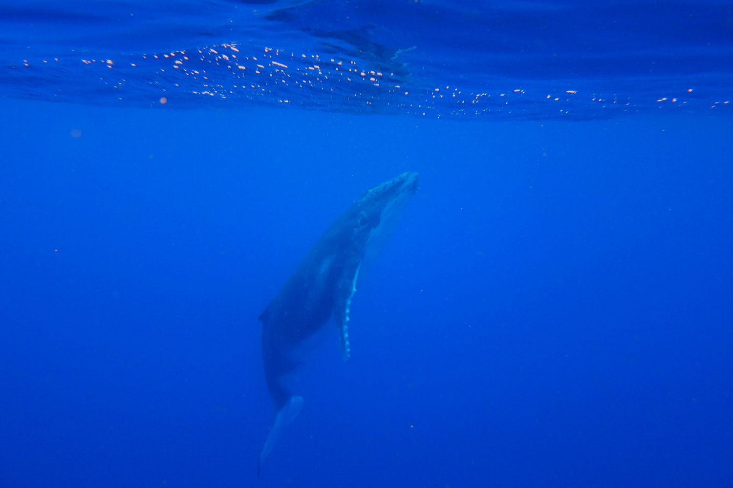 fabfamily_humpback06