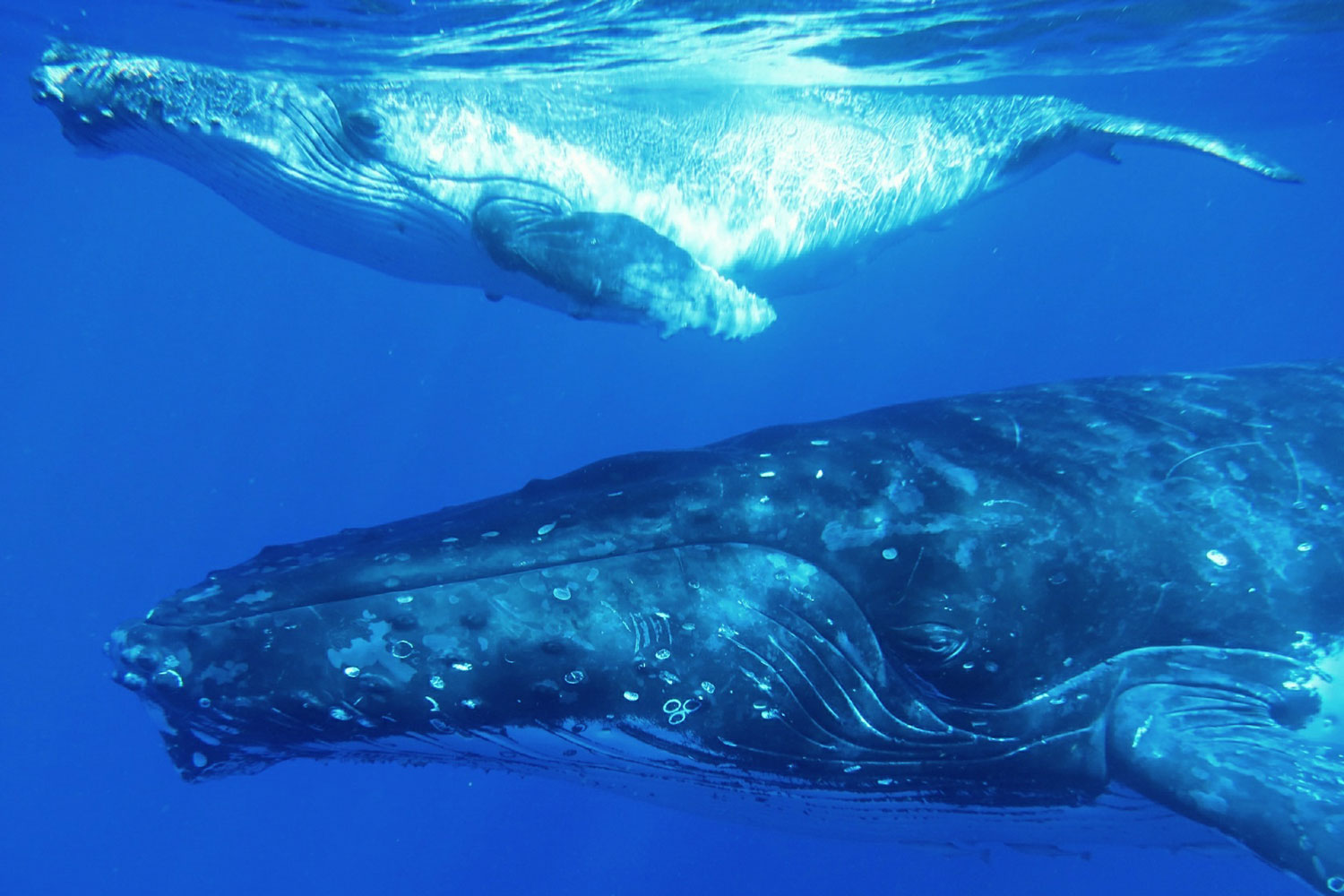 fabfamily_humpback09