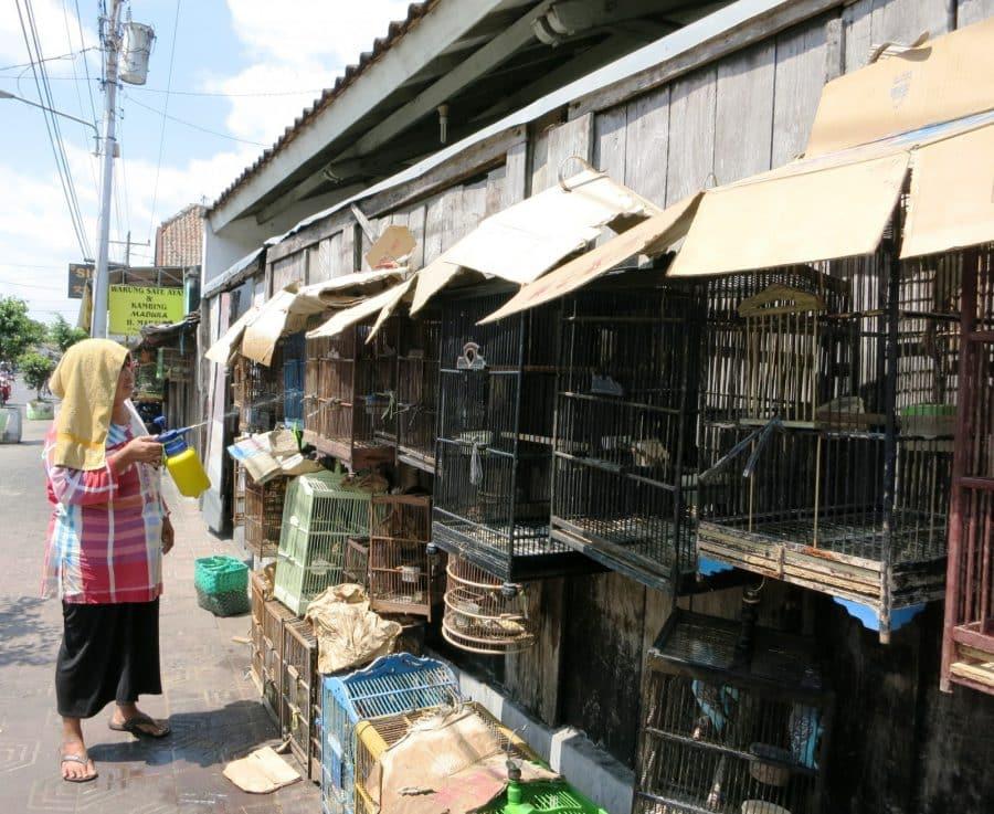 indonesien reiseberichte yogyakarta  die indonesier