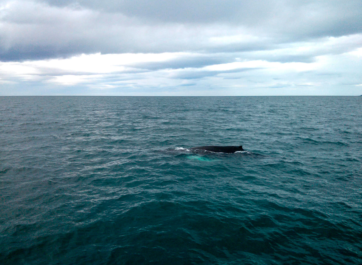 whale-watching-in-husavik-iceland_15