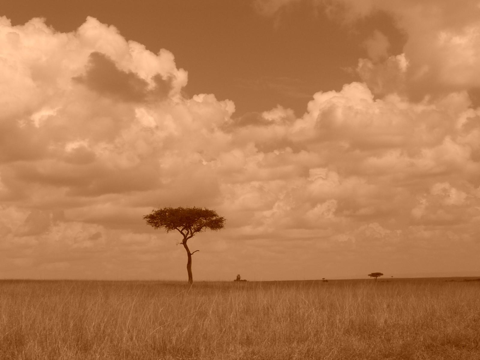 Duell in der Savanne — Reisedepeschen