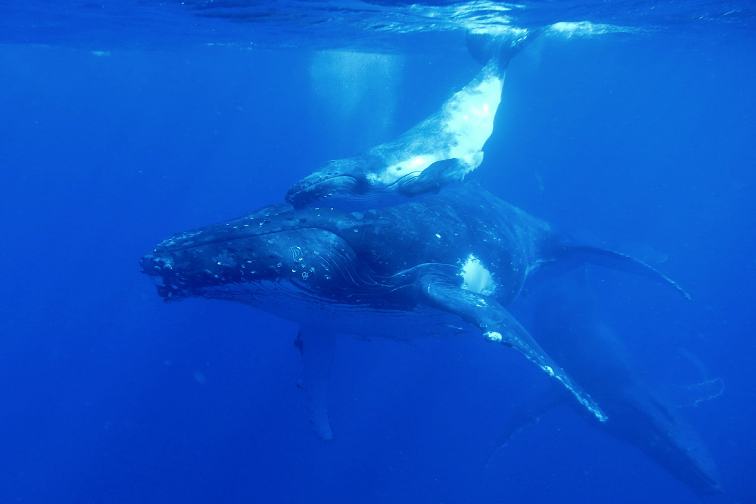 fabfamily_humpback08