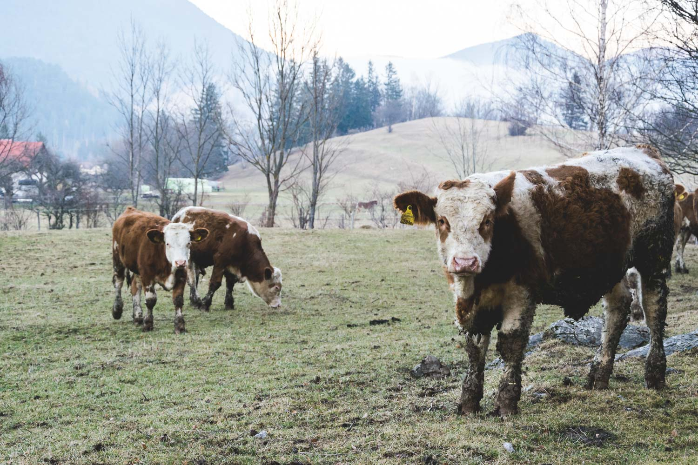 Puchberg am Schneeberg - Wiener Alpen