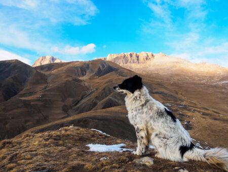 Hund im Kaukasus